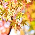Keď sychravá jeseň prekvapí. Ako sa obliekať v tomto ročnom období?
