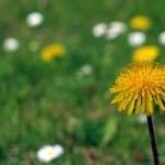 Ako stráviť prvé jarné dni?